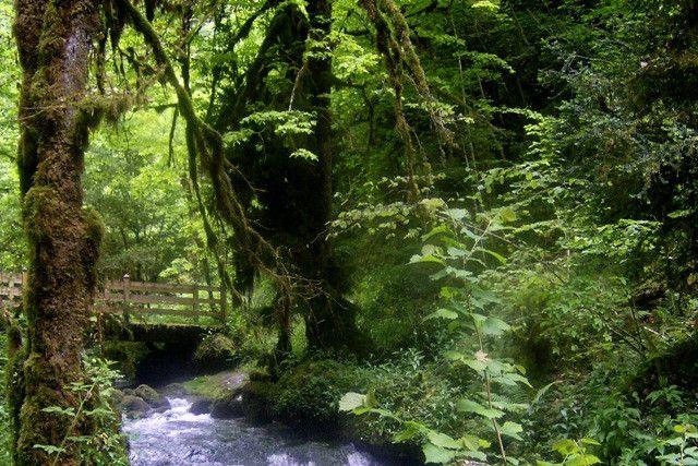 """Randonnée à Asque, à travers sa forêt surnommée """"La Petite Amazonie"""" (Office de tourisme des Hautes-Pyrénées)"""