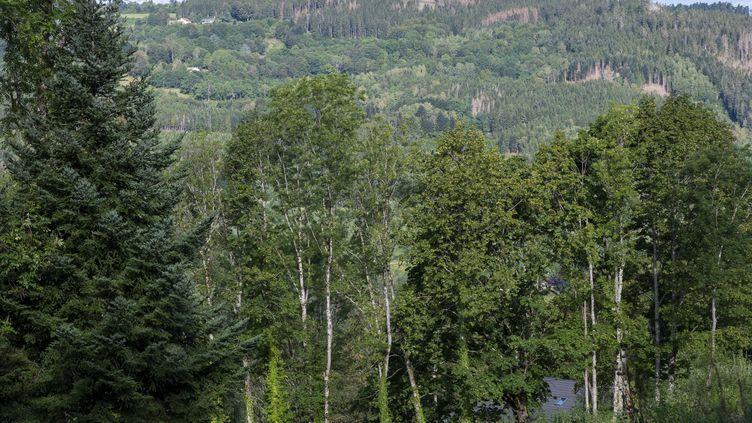 Ban-sur-Meurthe-Clefcy, dans les Vosges, le 18 août 2020. (JEAN-CHRISTOPHE VERHAEGEN / AFP)