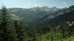 Plusieurs randonneurs ont mystérieusement disparu ces dernières années dans la forêt du Boscodon (Hautes-Alpes) et le mystère est toujours entier. (CAPTURE D'ÉCRAN FRANCE 3)