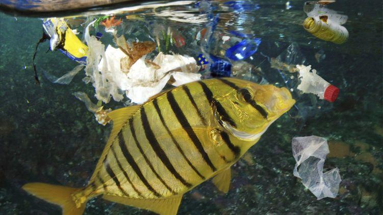 Un poisson pris dans le plastique, dans la mer des Caraïbes, en février 2018. (MAXPPP)