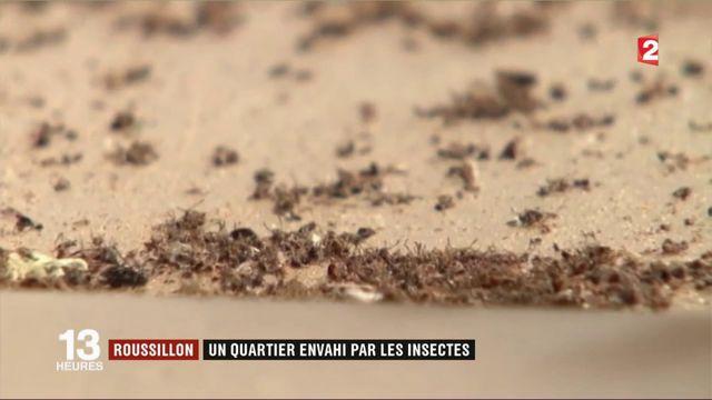 Roussillon : un quartier envahi par les insectes
