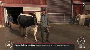 Vache qui concourre au salon de l'agricutulre. (France 2)