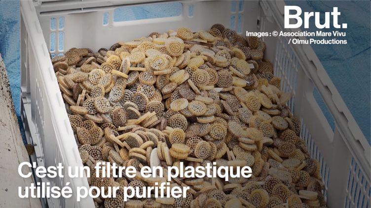 VIDEO. Les biomédias, cette pollution plastique peu connue qui inquiète les associations (BRUT)