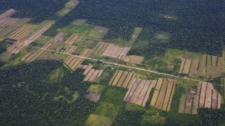 Vue aérienne de la déforestation en Amazonie. (AFP)