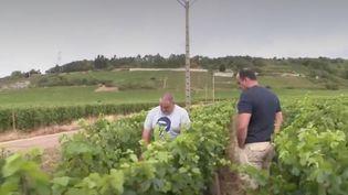 De violents orages et chutes de grêles ont touché des domaines viticoles réputés. C'est le cas à Nuits-Saint-Georges en Côte-d'Or. Une partie de la récolte a été détruite. (France 2)