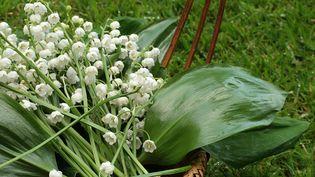 Le muguet peut se replanter, mais attention, c'est une plante toxique. (HMPROUDLOVE / E+ / GETTY IMAGES)