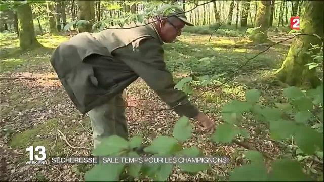 Sécheresse : sale temps pour les champignons