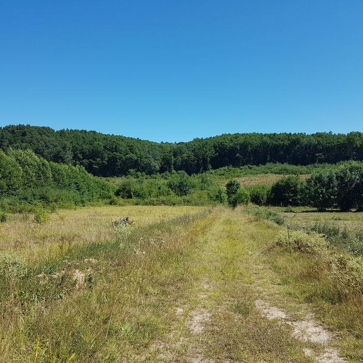 Uneretenue d'eau pourrait être aménagée sur la zone du Testet, à 300 mètres en amont du projet de barrage avorté en 2015, à Lisle-sur-Tarn (Tarn). (ILAN CARO / FRANCEINFO.FR)