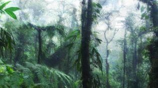 Photo d'illustration. Les forêts tropicales s'installent dans des latitudes bien plus hautes que la normale lors de l'épisode du PETM. (MATTEO COLOMBO / MOMENT OPEN / GETTY IMAGES / AWA SANE / FRANCEINFO)