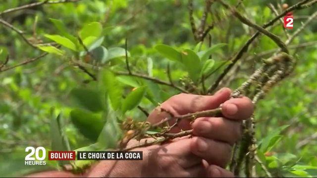 Bolivie : le choix de la coca
