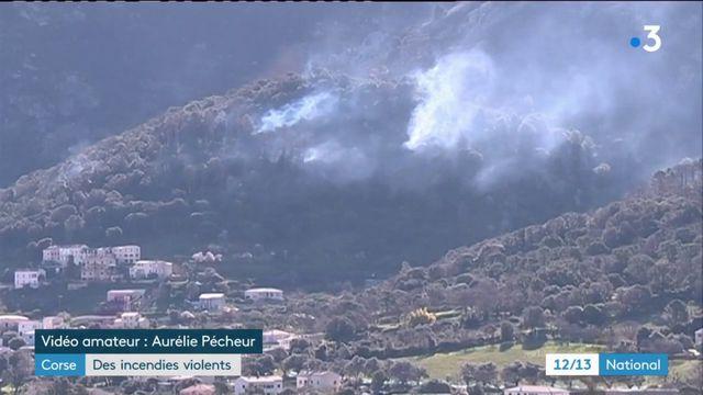 Corse : des incendies d'origine criminelle ?