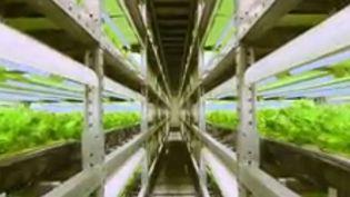 Sept ans après la catastrophe nucléaire de Fukushima qui a contaminé les sols, le Japon est-il en train d'inventer l'agriculture de demain ? Direction les fermes futuristes, où la technologie se met au service des légumes. (FRANCE 2)