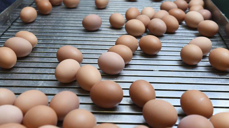 Des œufs de poule dans la région de Namur (Belgique), le 12 août 2017. (JOHN THYS / AFP)