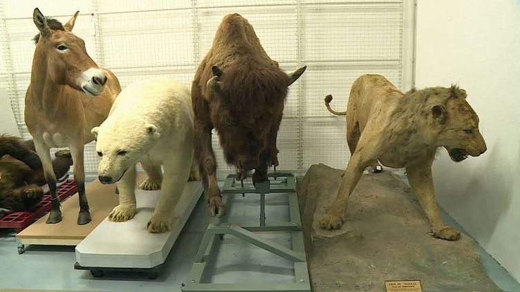 Les animaux du museum d'Histoire naturelle de Toulouse prêts à recevoir les visiteurs (France 3 Occitanie)