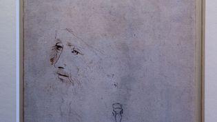 Cette esquisse a été récemment confirmée comme représentant Léonard De Vinci. Elle fait partie de la collection royale du Windsor Castle et sera exposée cet été à Buckingham Palace. (STEVE PARSONS / MAXPPP)