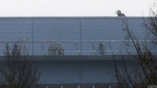 Un membre des forces spéciales sur le toit de l'imprimerie où se trouventles preneurs d'otages, à Dammartin-en-Goële (Seine-et-Marne). (JOEL SAGET / AFP)