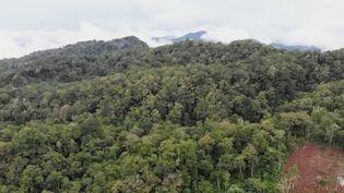 Les forêts couvraient autrefois la moitié de la surface du globe, c'est moins de 10% aujourd'hui. À São Tomé (São-Tomé-et-Principe), dans le golfe de Guinée, où la forêt est classée par l'Unesco comme une réserve exceptionnelle. Un véritable paradis pour les oiseaux, mais pas seulement. (France 2)