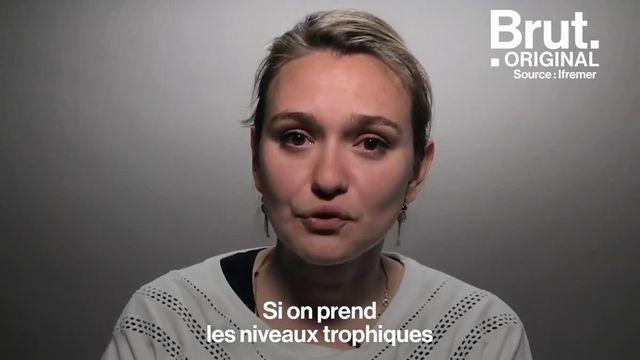 Aurélie, une militante de la cause animale, répond aux idées que l'on attribue souvent au véganisme.