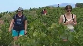 vignes (France 3)
