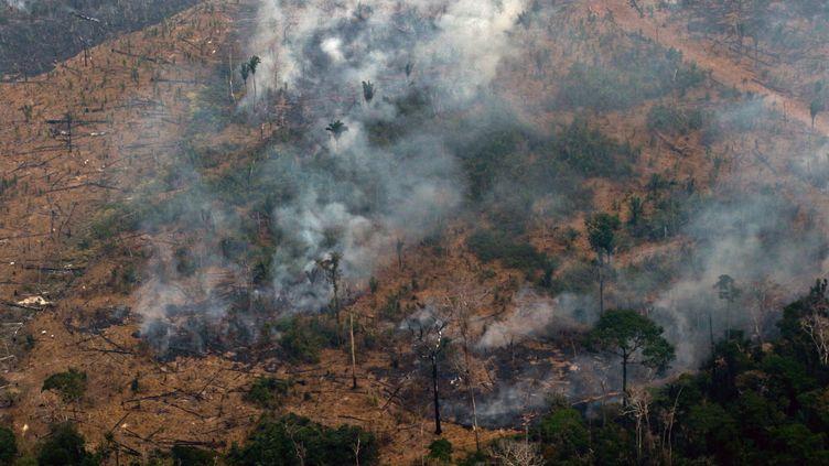 Une vue aérienne d'une parcelle forestière à Boca do Acre au Brésil, le 24 août 2019. (LULA SAMPAIO / AFP)