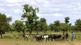 Des bergers peuls et leur troupeau dans la province de Oudalan, au Burkina Faso, le 5 juin 2019. (PHILIPPE ROY / PHILIPPE ROY)