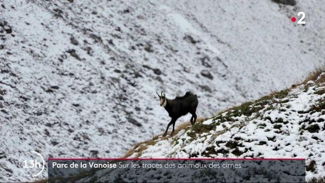 Savoie : à la recherche des animaux sauvages dans le Parc national de la Vanoise