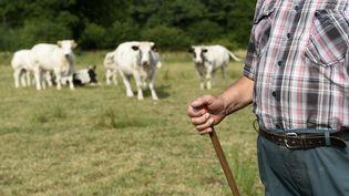 Un éleveur avec ses vaches dans un champ en Belgique. Photo d'illustration. (JEAN-MARC QUINET / MAXPPP)