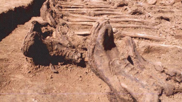 Restes de 20 soldats britanniques, tués pendant la Première guerre mondiale. Ils ont découverts lors de fouilles à Arras (Pas-de-Calais), lors de fouilles par des archéologues de l'Inrap et de la ville d'Arras.  (Gilles Prilaux - Inrap)