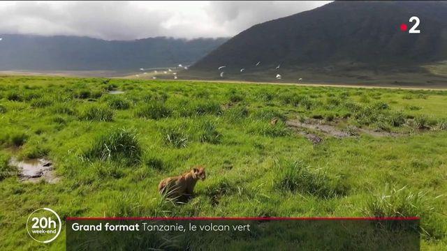 Tanzanie : le Cratère du Ngorongoro, paradis pour animaux et berceau de l'humanité