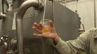 Le jojoba permet de produire une huile très hydratante que s'arrachent de plus en plus les marques du cosmétique. Israël et l'Égypte se sont lancés dans la production de ce nouvel or vert. (France 2)