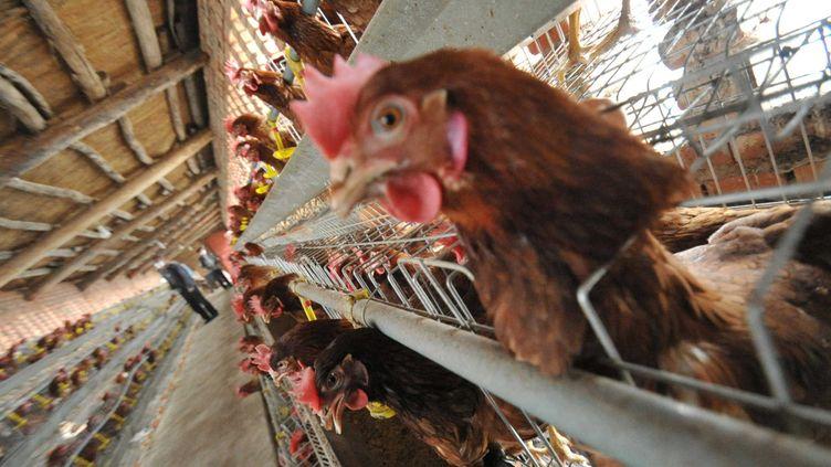 Une fraude portant sur 6 000 tonnes de viande de volailles a été mise au jour par la police dans un groupe agroalimentaire du Finistère. (CHINAFOTOPRESS / GETTY IMAGES)