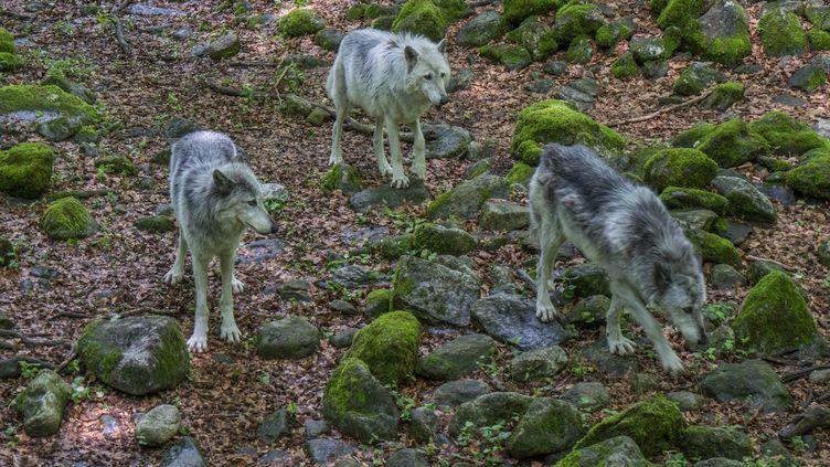 La Maison des loups, le 11 décembre 2017, à Orlu (Ariège). (BRIGITTE MERLE / PHOTONONSTOP / AFP)