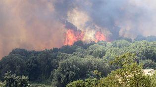 Les pompiers ont évalué à 1 800 hectares la surface ravagée par les incendies à Olmeta-di-Tuda, près de Bastia (Haute-Corse). (PASCAL POCHARD-CASABIANCA / AFP)