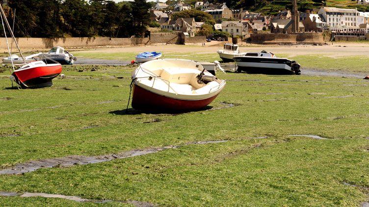 Une plage de Saint-Michel-en-Grève (Côtes-d'Armor), envahie d'algues vertes, le 9 août 2009. (FRED TANNEAU / AFP)