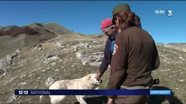Parc national des Abruzzes : comment les éleveurs cohabitent avec les ours et les loups