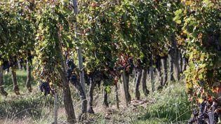 La famille d'un ouvrier viticole décédé en 2009 se bat pour faire reconnaitre le caractère professionnel de sa maladie (illustration).  (MAXPPP)