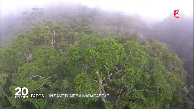 Carnet de voyage : sur les traces des lémuriens de Madagascar