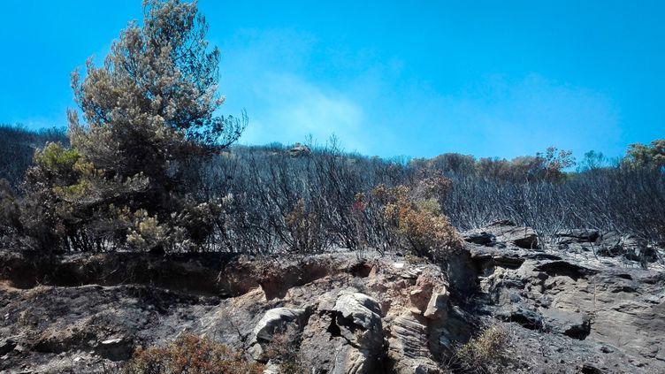 L'incendie de Sisco, le 13 août 2017. (Jean-François Fernandez / Radio France)
