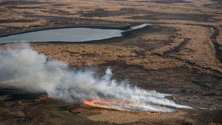 Un incendie dans le delta du Parana, le 1er août 2020 près de Rosario (Argentine). (MARCELO MANERA / AFP)