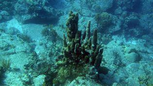 Les réserves se trouventsous les fonds marins des socles continentaux de l'Australie, de la Chine, de l'Amérique du Nord et de l'Afrique du Sud. (MARCEL MOCHET / AFP)