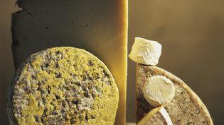 Selon l'étude, le fromage, via une protéine appelée caséine, a un effet comparable à celui des opiacés. (JAUBERT / ONLY FRANCE / AFP)