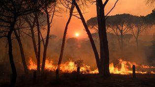 Le feu de forêt près de Gonfaron (Var), le 17 juillet 2021. Photo d'illustration. (AFP)
