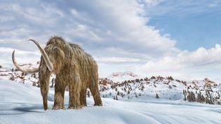 Illustrationréaliste en 3D d'un mammouth laineux dans un environnement hivernal. (LEONELLO CALVETTI / SCIENCE PHOTO LIBRARY RF / GETTY IMAGES)