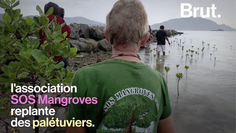 VIDEO. En Nouvelle-Calédonie, ils replantent des mangroves pour protéger les côtes (BRUT)