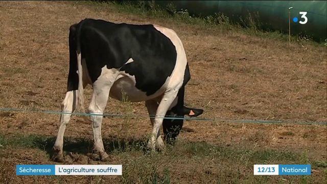 Sécheresse : l'agriculture souffre