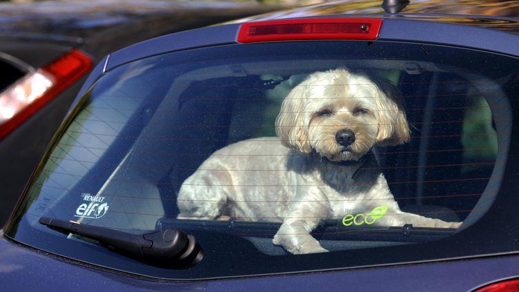 Afin d'apaiser le stress du voyage pour un chien, un anti-vomitif ou des phéromones apaisantes semblent tout indiqués. Photo d'illustration. (ALEXANDRE MARCHI /NCY / MAXPPP)
