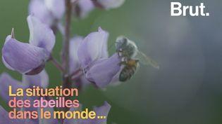 VIDEO. Quelle est la situation des abeilles à travers le monde ? (BRUT)
