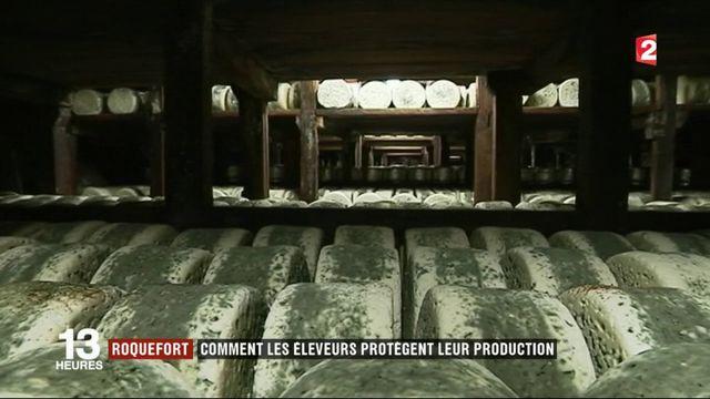 Roquefort : comment les éleveurs protègent leur production
