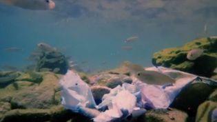 Chaque jour, des tonnes de microfibres plastiques s'échappent de nos machines à laver et finissent dans les océans. Le gouvernement veut imposer aux fabricants l'installation de filtres pour retenir ces polluants. C'est une première mondiale. (FRANCE 3)