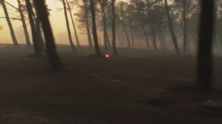 Un incendie s'est déclenché lundi 24 août, dans la commune d'Istres dans les Bouches-du-Rhône. En quelques heures seulement les flammes ont ravagé 450 hectares de végétation. (France 3)